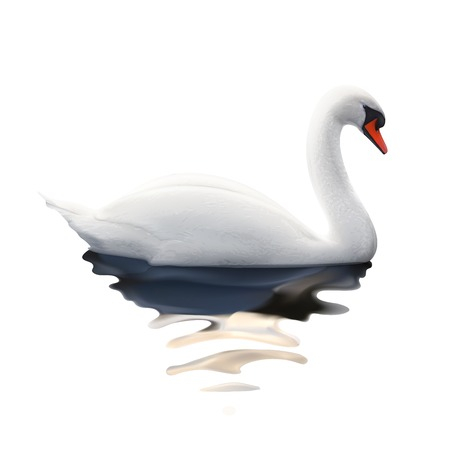 Swan, vector illustration