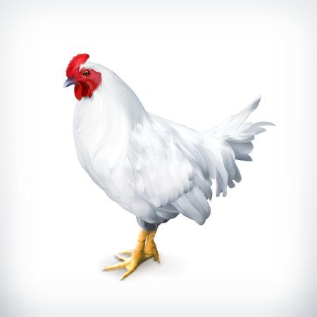White chicken, vector illustration