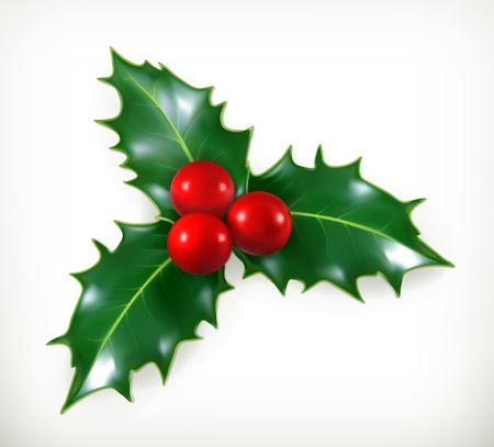 Holly, traditional Christmas decoration vector icon