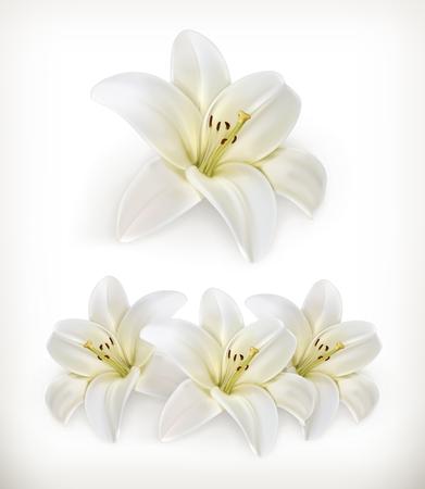Illustration pour White lily, vector icons - image libre de droit