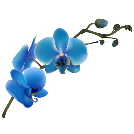 Illustration pour Blue orchids. Tropical flowers. Exotic plants. Floral background. Card. Frame. Border. Template. - image libre de droit