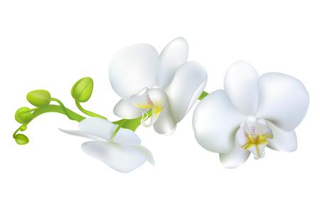 Illustration pour White orchids. Tropical flowers. Exotic plants. Floral background. Card. Frame. Border. Template. - image libre de droit