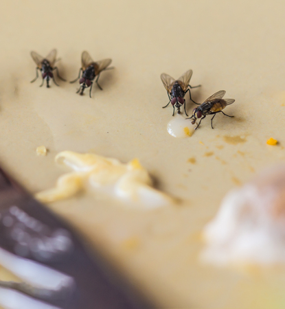 Shoot the Live house fly, Food waste on the table.on the blurred background and soft focus.
