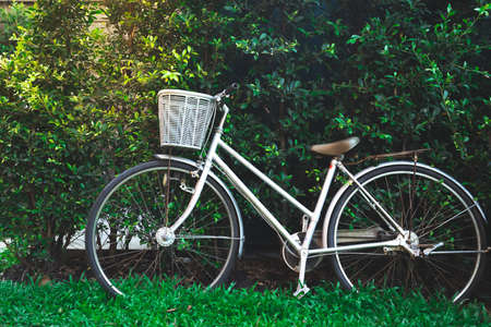 Foto de white vintage bicycle parks on green grass field against  with green leafs wall background - Imagen libre de derechos