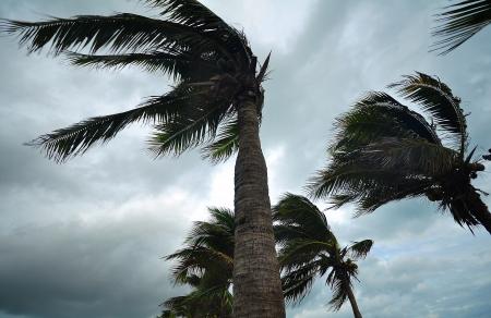 palms at hurricane