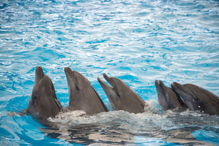 Friendly dophins swimming together in amazing dophin show at big blue pool