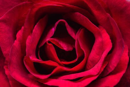 Photo for Closeup of red rose detail art - Royalty Free Image