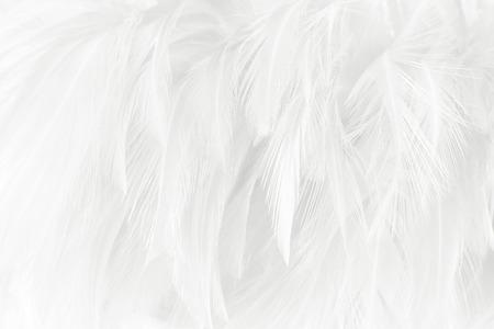 Foto de White feathers texture background. - Imagen libre de derechos