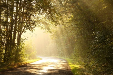 Lane leading through the misty autumn forest at dawn