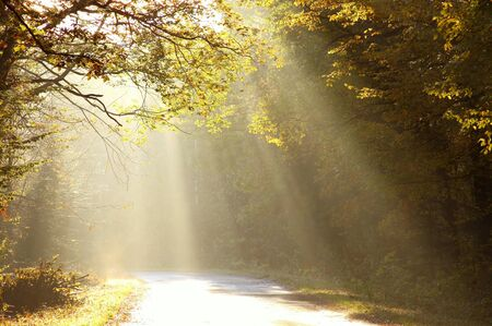 Sun rays falls on the country road leading into the misty deciduous forest