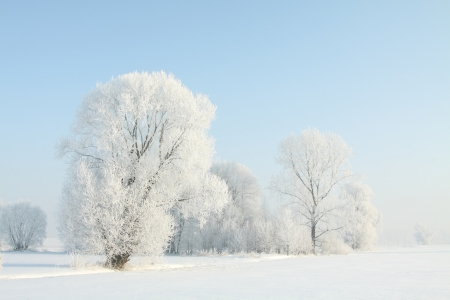Winter landscape of frosted trees against a blue sky on a sunny morningの写真素材