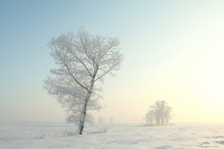Frosted tree on a sunny winter morning