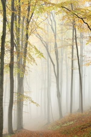 Path leading through the autumn forest on a misty morning