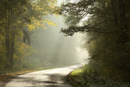 Country road running through the deciduous forest on a foggy morning