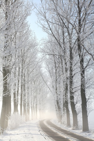 Winter rural road among frosted trees lit by the morning sunの写真素材
