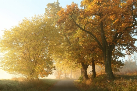 Rural landscape on a misty autumn morning