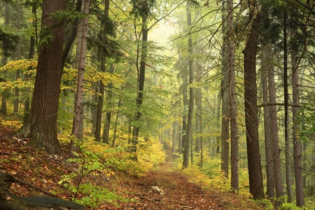 Forest trail in autumn scenery in early October