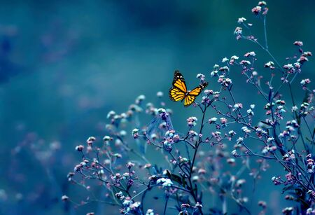 Photo for Beautiful butterfly on flower - Royalty Free Image