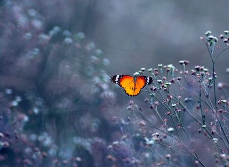 Photo for plain tiger butterfly - Royalty Free Image
