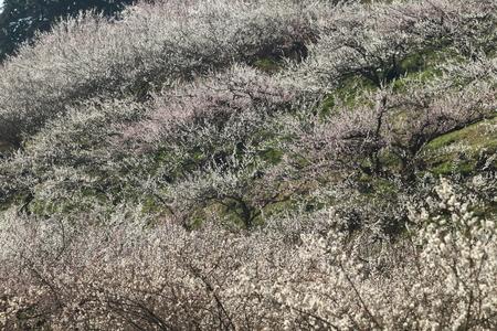 Naturephotograph170400132