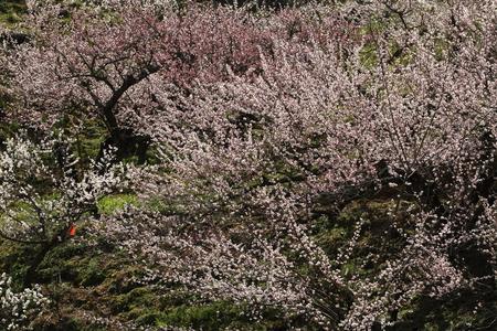 Naturephotograph170400166