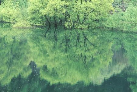 Naturephotograph170400187