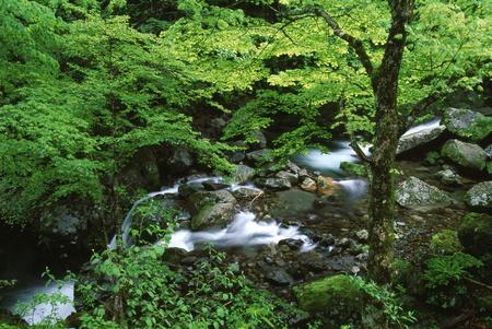 Naturephotograph170400190