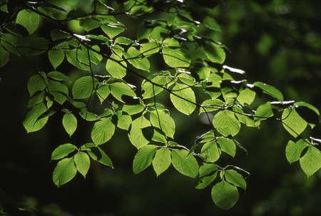 Naturephotograph170400237