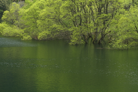 Naturephotograph170400284