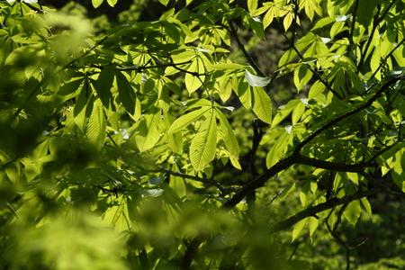 Naturephotograph170400296
