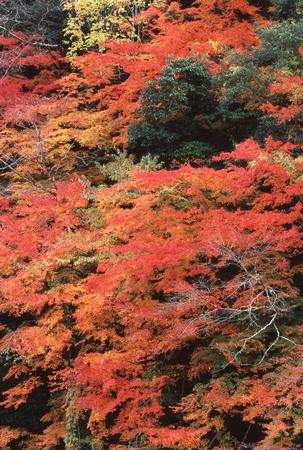 Naturephotograph170400608