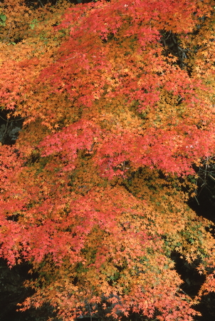 Naturephotograph170400615