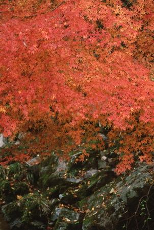 Naturephotograph170400706