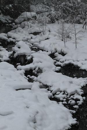 Naturephotograph170400994