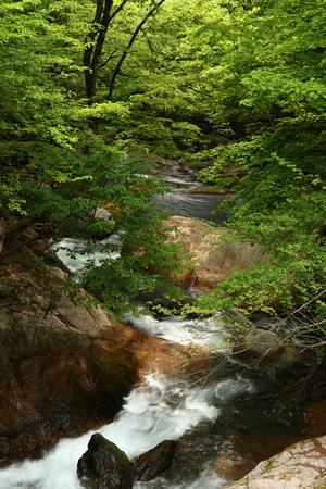 Naturephotograph170401033