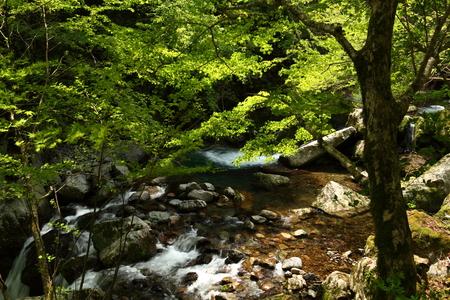 Naturephotograph170401034