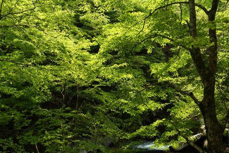 Naturephotograph170401035