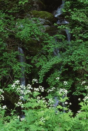 Naturephotograph170401048