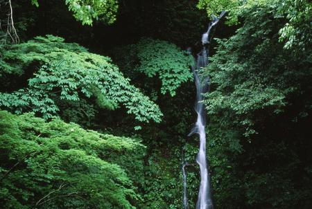 Naturephotograph170401054