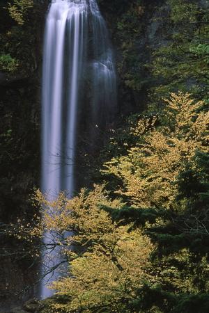 Naturephotograph170401055