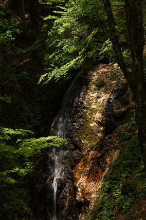 Naturephotograph170401106