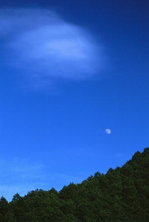 Naturephotograph170401116