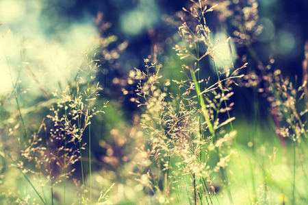Forest meadow with wild grasses. Macro image with small depth of field. Vintage filter
