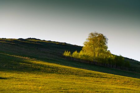 Photo for Green birch trees on the hills with fresh green grass at sunset. Beautiful summer landscape. South Ural, Russia - Royalty Free Image