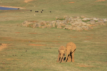 Elephants, Cab? Rceno, Santander. Cantabria