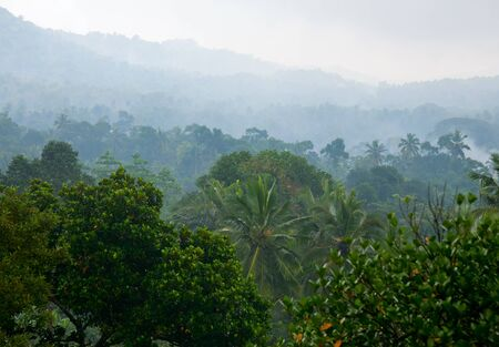 Tropical rainforest mountain covered in fog