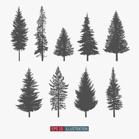 Illustration pour Coniferous tree isolated silhouettes set. Pine tree and fir tree flat icons. Elements for your design works. Vector illustration. - image libre de droit