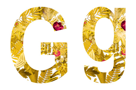 English alphabet of G. made from dry leaves and dry grass on white background for isolated with clipping path, Capital letter and small letter  from dry leaf on white background for isolated