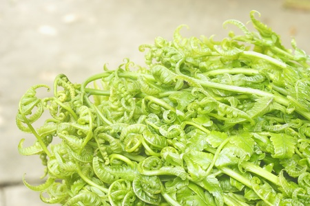 Bouquet of fresh vegetable ferns leaves. ferns for food.