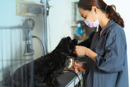 Female groomer at work holds a brush for pet brushing wool in the beauty salon for dogs